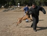 patrol_dog_training